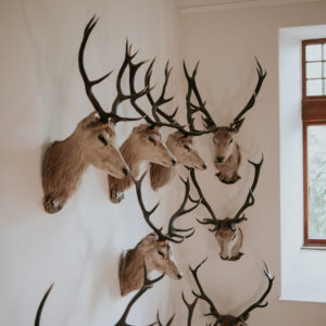 deer skull wedding venue